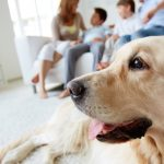 Living with Pets: The Do's and Don'ts of Air Purifiers